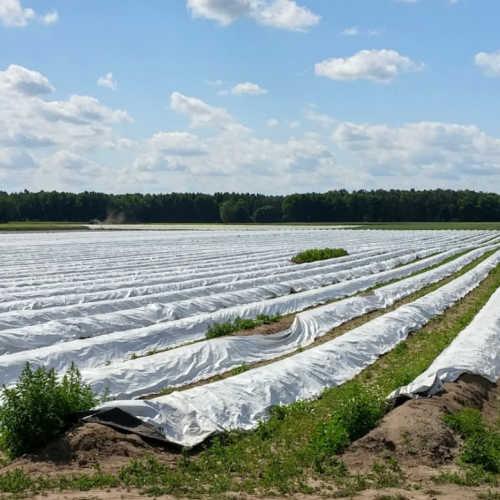 Asparagus fields near Walsrode in Lower Saxony in Germany.