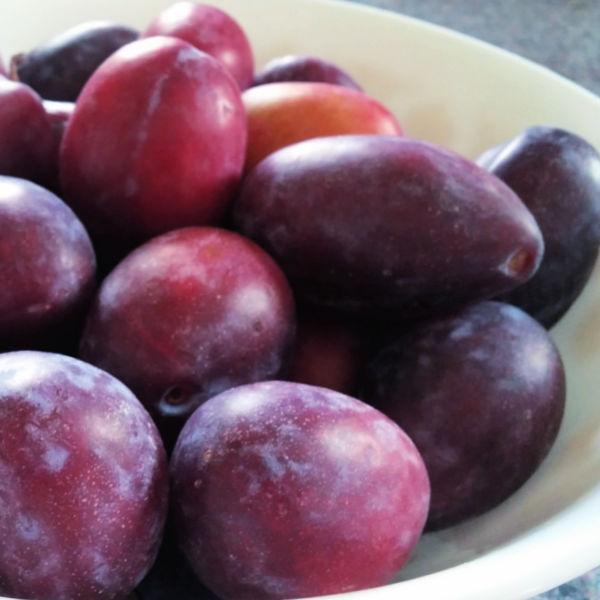 Turn these prune plums into a traditional German plum cake, made just like Oma with a super easy recipe.